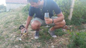 Dalmatia Wine Tour Opcija Tours 5